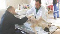 HBB'den sokak hayvanlarına şefkat eli …