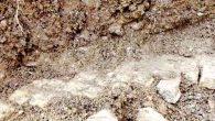 Roma'nın topraklarında her yer 'mozaik'