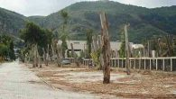 Yasal ağaç katliamı!