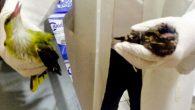 İyileşen kuş doğa'ya