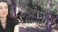 Okul için orman yok edilmemeli …