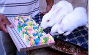 Tavşan'ın çektiği dilekte