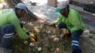 Defne Parkları Çiçek Açıyor