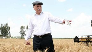 Buğday üreticisi zorda: