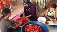 Yaz domatesini kışa hazırlıyorlar