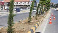 HBB'den kente ağaç takviyesi