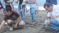 Yeşil Deniz Kaplumbağası özgürlüğüne kavuşturuldu