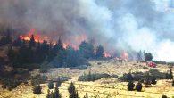 Orman yangınları eksik olmuyor