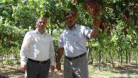 Hedef; 90 bin ton üzüm