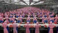 İstihdam azaldı, üretim arttı