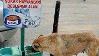 Büyükşehir'den hayvanlara  sahip çıkma  anlayışı