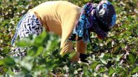Dün, 'Dünya Kadın Çiftçiler Günü' idi…