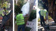 Asırlık ağaçlara restore