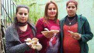 Girişimci köyün Girişimci kadınları…