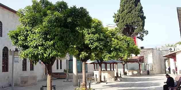 Ağaçları kesilen kentin…