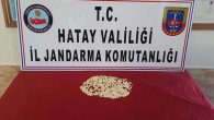 Reyhanlı'da Jandarma operasyonu: