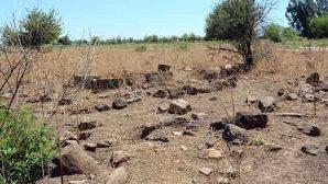 Kayı boyu sembollü  mezar taşları