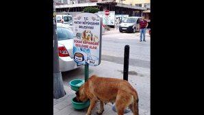 Sokak hayvanları tok…