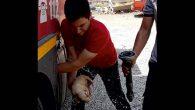 Su borusuna sıkışan köpekler kurtarıldı