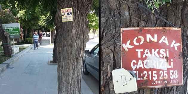 Ağaçları serbest bırakamadık