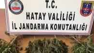 Jandarma'dan Reyhanlı, Defne ve Arsuz'da 5 uyuşturucu operasyonu: