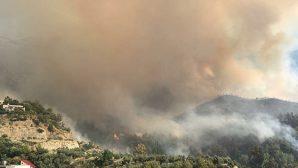 Arsuz ve Yayladağı'nda  Orman Yangını