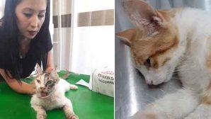 Hatay DO-YA, kedi-köpeklere zulüm edildiği görüşünde: