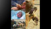 İnsan Öldürüyor,  Köpek Yaşatıyor!