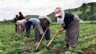 """Dün, """"Dünya Kadın Çiftçiler Günü""""ydü"""