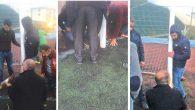 Futbol sahalarında ender görülen bir olay