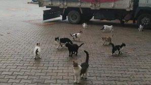 Kediler Sahipsiz Kaldı