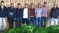 Arsuz'da CHP'li gençler tarlada…