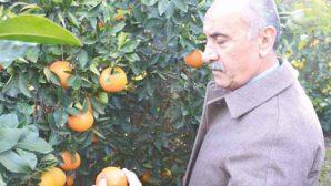 Culha: Çiftçinin zararı karşılanmalı …