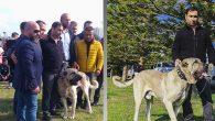 258 köpek yarıştı
