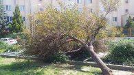 Belediye ağacı kesti!