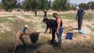 Amik'in Suyu Kuruyor,  Balıklar Ölüyor…