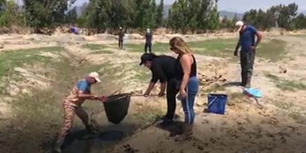 Amik'te balık kurtarma operasyonuna katılmak isteyenlere: