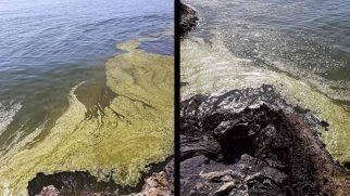 Samandağ denizinin suyu kirli