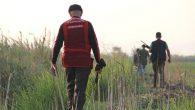 Kırıkhan'da Yaban Domuzu Avı!
