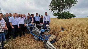 Samandağ'da tarımın yeni ürünü YULAF