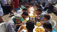 Arsuz'da Kayısı Tanıtımı