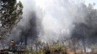 Narlıca'da  Orman Yangını…