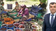 Yaş meyve ve sebzede