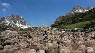 Türkiye'de Çoban ithal edileceği haberleri gündem oluştururken: