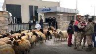 5 Çoban, sürüleriyle eylem yaptı