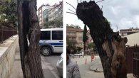 Edirne'de tarihi kapılara 'özel ekip'!