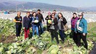 CHP'li Kadınlara Tarla Sürprizi