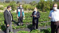 Antakyalı Çiftçi, Tüketiciyi Tarla ve Doğayla Buluşturuyor…