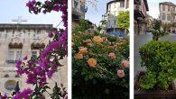 Sokakların sessizliğinde… Çiçeklerin rengârenk dansı