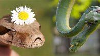 Doğa uyanıyor Hayvanlar da…